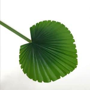 petit feuillage vert