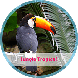 jungle tropical